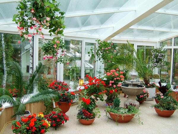 rastenija dlja zimnego sada Как создать зимний сад в своём доме